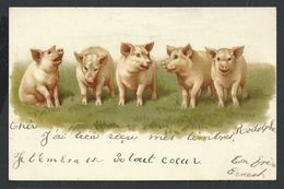+++ CPA  - Carte Fantaisie - Cochon - Pig   // - Pigs