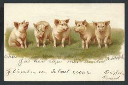 +++ CPA  - Carte Fantaisie - Cochon - Pig   // - Cochons