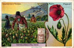 4 Card  Plantes MEDICINALES  DRUGS China Opium  Pavot  Papaver  Mohn Opiumernte Persien Amanita Muscaia  PUB Addiction - Sonstige