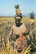 Swaziland - Pineapple Picker In The Malkerns - Woman - Femme - Swaziland