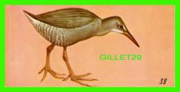 FICHES ILLUSTRÉES OISEAUX - BIRDS,  CLAPPER RAIL  - No 38 - - Animaux