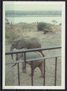 Afrika, Natur, Savanne, Elefanten Von Hobbyfotograf (2) - Afrika