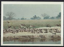 Afrika, Natur, Savanne, Vögel Am Fluss Von Hobbyfotograf (3) - Afrique