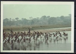 Afrika, Natur, Savanne, Vögel Am Fluss Von Hobbyfotograf (4) - Afrika
