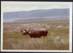 Afrika, Natur, Savanne, Nashorn Von Hobbyfotograf (6) - Afrika