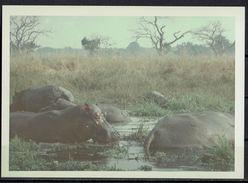 Afrika, Natur, Savanne, Flusspferde Von Hobbyfotograf (7) - Afrika