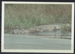 Afrika, Natur, Savanne, Krokotil Von Hobbyfotograf (8) - Afrika