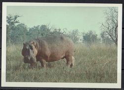 Afrika, Natur, Savanne, Flusspferd Von Hobbyfotograf (12) - Afrika