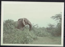 Afrika, Natur, Savanne, Elefant Von Hobbyfotograf (14) - Afrika