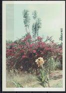Afrika, Natur, Savanne, Pflanzen Von Hobbyfotograf (15) - Afrique
