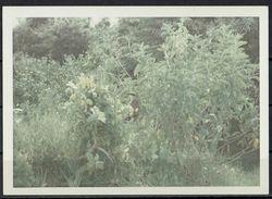 Afrika, Natur, Savanne, Pflanzen,Vogel Von Hobbyfotograf (16) - Afrika