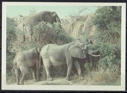 Afrika, Natur, Savanne, Elefanten Von Hobbyfotograf (23) - Afrika