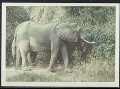 Afrika, Natur, Savanne, Elefanten Von Hobbyfotograf (24) - Afrika