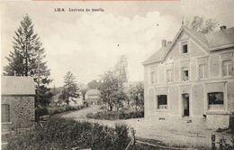 Libin - Environ Du Moulin - Pas Circulé - Pas D'éditeur Mentionné - SUPER - Libin
