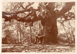 PHOTO FRANÇAISE - LE FAU PRINCIPAL - HETRE TORTILLARD DE LA FORET DE REIMS - JE PENSE VERZY  - MARNE 1914 1918 - 1914-18