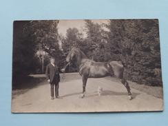 "Man Met PAARD / CHEVAL / HORSE / PFERD """" Beautiful Horse """" ( Foto J. Piron Namur /zie Foto's Voor Detail ) ! - Other"