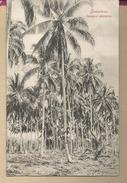 AFRIQUE - TANZANIE   -  ZANZIBAR  - Cocoanut  Plantation - Tanzanie