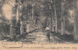 FOUESNANT. L'ALLE DE LOC-HILAIRE. EDIT, BERNES, EPICERIE, TABACS. AUTRES MARQUES. PANORAMA. CIRCA 1900s .TBE -BLEUP - Quimper