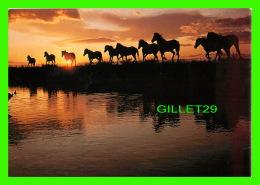 CHEVAUX - HORSES - CHEVAUX DE CAMARGUE - PHOTO HANS W. SILVESTER - - Chevaux