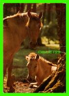 CHEVAUX - HORSES - CHEVAUX SAUVAGES DE DULMEN - DULMENER WILD-HORSES - TRAVEL IN 1973 - ENGADIN PRESS - - Chevaux