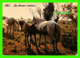 CHEVAUX - HORSES - AH! ... LA BONNE SOURCE -  EDITION DERIAZ BAULMES - CIRCULÉE EN 1984 - - Chevaux