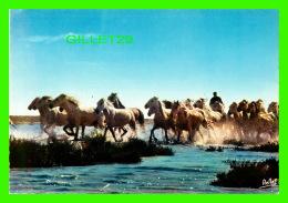CHEVAUX - HORSES - EN CAMARGUE AVEC LES GARDIANS - LES CHEVAUX CAMARGUAIS - EDITIONS RELLA - - Chevaux
