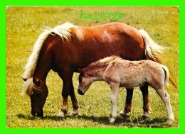 CHEVAUX - HORSES - MAMAN ET SON POULIN - ENGADIN PRESS - CIRCULÉE EN 1984 - - Chevaux