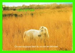 CHEVAUX - HORSES - ON EST TOUJOURS BIEN LÀÈ, OU ON SE DÉVOUE - HOUTLAND, BELGIQUE - - Chevaux