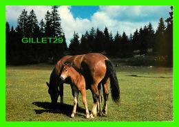 CHEVAUX - HORSES - AU PÂTURAGE DU JURA, FRANCHES MONTAGNES - EDITION DERIAZ BAULMES - - Chevaux