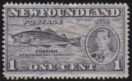 Newfoundlans    .    SG   .     257d      .       O      .     Gebruikt   .    /      .        Cancelled - 1908-1947