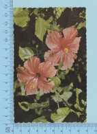 Tinted Hibiscus From Bermuda Southland Used In 1971 - Fleurs