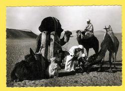 Real Photo Postcard CAMEL Camels & Natives NORTH AFRICA AFRIKA - AFRIQUE 1940/50 - Postcards