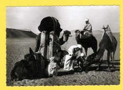 Real Photo Postcard CAMEL Camels & Natives NORTH AFRICA AFRIKA - AFRIQUE 1940/50 - Unclassified