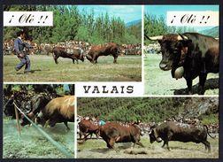 VACHES - COWS - KÜHEN - Circulé - Circulated - Gelaufen - 1978. - Kühe