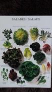 CPM SALADES MACHE CHICOREE SCAROLE BATAVIA ENDIVE - Flores, Plantas & Arboles