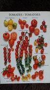CPM TOMATES TOMATOES VARIETES ED CARTES D ART - Flowers, Plants & Trees