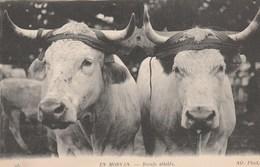 CPA - AGRICULTURE ... EN MORVAN 95 ... BOEUFS ATTELES -             TDA65 - Attelages