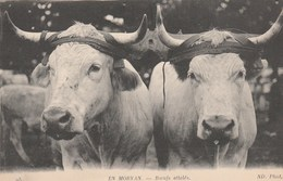 CPA - AGRICULTURE ... EN MORVAN 95 ... BOEUFS ATTELES -             TDA65 - Wagengespanne
