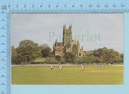 Sport Cricket  - The Cricket Ground + Cathedral Worcester England, Animated - Cricket