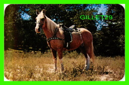 CHEVAUX - HORSES - PALOMINO HORSES - PUB. BY SANBORN SOUVENIR CO INC - - Chevaux