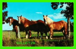CHEVAUX - HORSES - ON NOUS SURVEILLE ! - SUNSET WESTERN STORE, BENNINGTON, VERMONT - - Chevaux