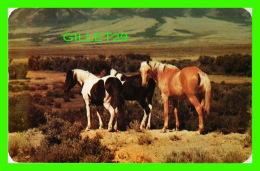 CHEVAUX - HORSES ON THE RANGE -  DEXTER -  PUB. BY SANBORN SOUVENIR CO INC - - Chevaux