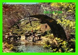 CHEVAUX - HORSES - PROMENADE À CHEVAL HALTE ! SOUS LE PONT GÊNOIS POUR SE DÉSALTÉRER - ÉCRITE - EDITIONS LA CIGOGNE - - Chevaux