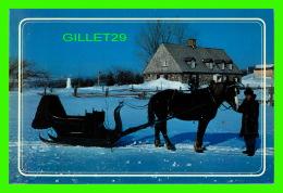 CHEVAUX - HORSES -  WINTER TIME - BALADE EN TRAINEAU AU QUÉBEC - - Chevaux