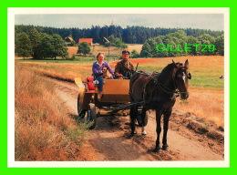 CHEVAUX - HORSES -  GMINA PARCHOWO - PROMENADE EN BUGGY - - Chevaux
