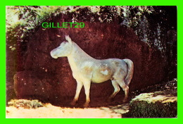 CHEVAUX - HORSES -  MUSEO DE PIEDRA, YATERAS, GUANTANAMO, CUBA - ÉCRITE - - Chevaux