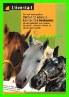 CHEVAUX - HORSES -  LES PUR-SANG ARABES -  L'ÉVENTAIL C'EST 18 DOCUMENTAIRES - - Chevaux