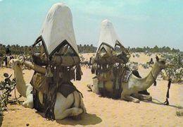 Afrique > NIGER Chameaux De Grande Tribu INGALL  MAURICE ASCANI 19 (chameau Camel)  *PRIX FIXE - Niger