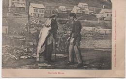 UNE BELLE MORUE   CLICHE DES OEUVRES DE MER - Saint-Pierre-et-Miquelon