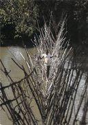 Afrique (Centrafrique) République CENTRAFICAINE Pont De Lianes Sur La Mbali (Editions N.M.C Cliché Renaudeau 8880) - Zentralafrik. Republik